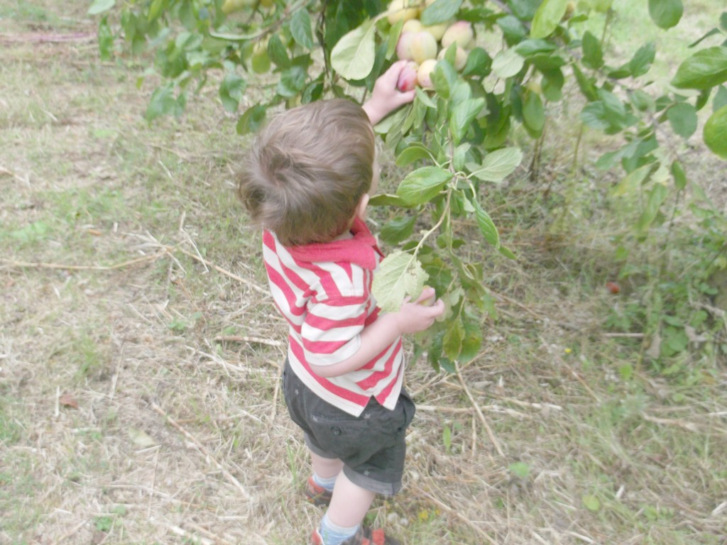 fruit picking southend
