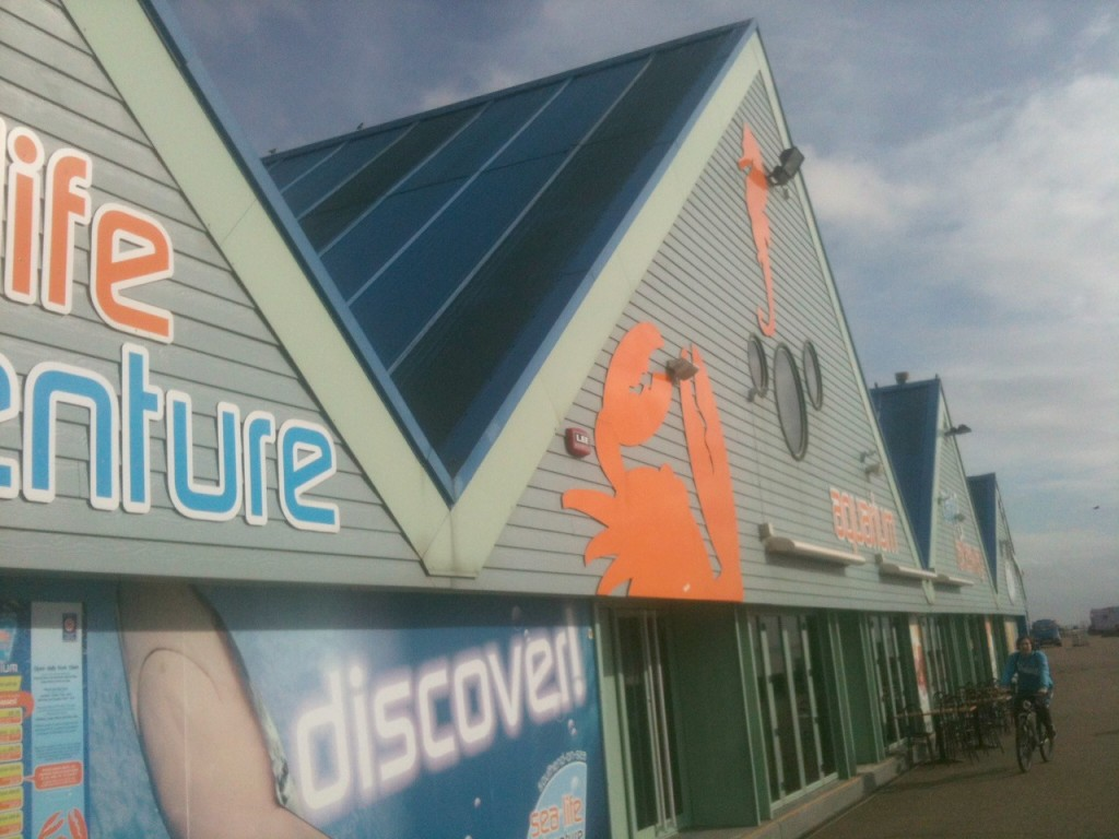 sealife adventure southend
