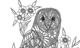 Free Owl Colouring Page