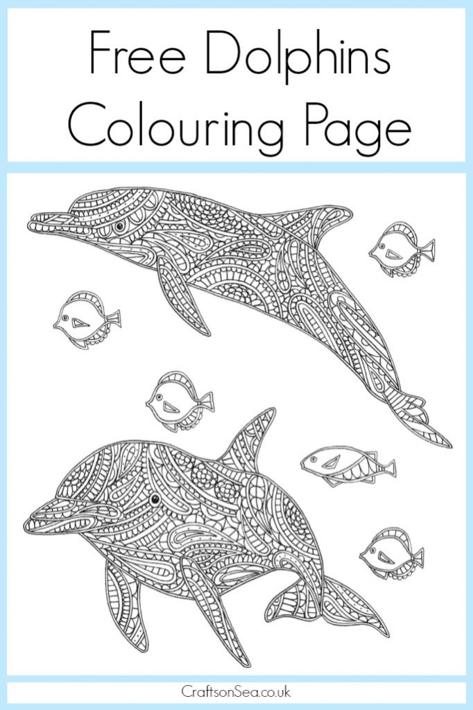 free dolphin colouring page