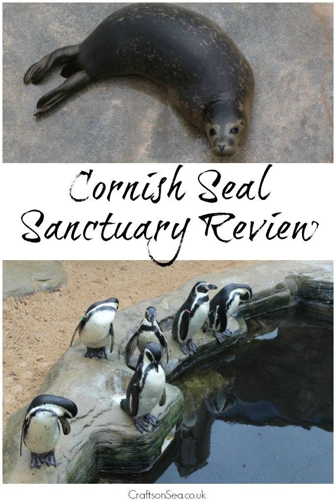 cornish-seal-sanctuary-review-animals