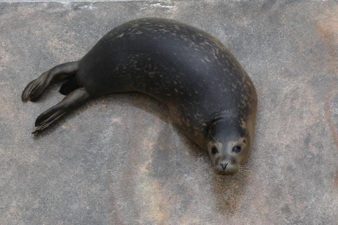cornish-seal-sanctuary-review