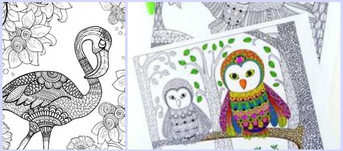 free bird colouring pages