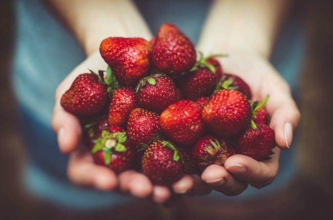 strawberry picking essex