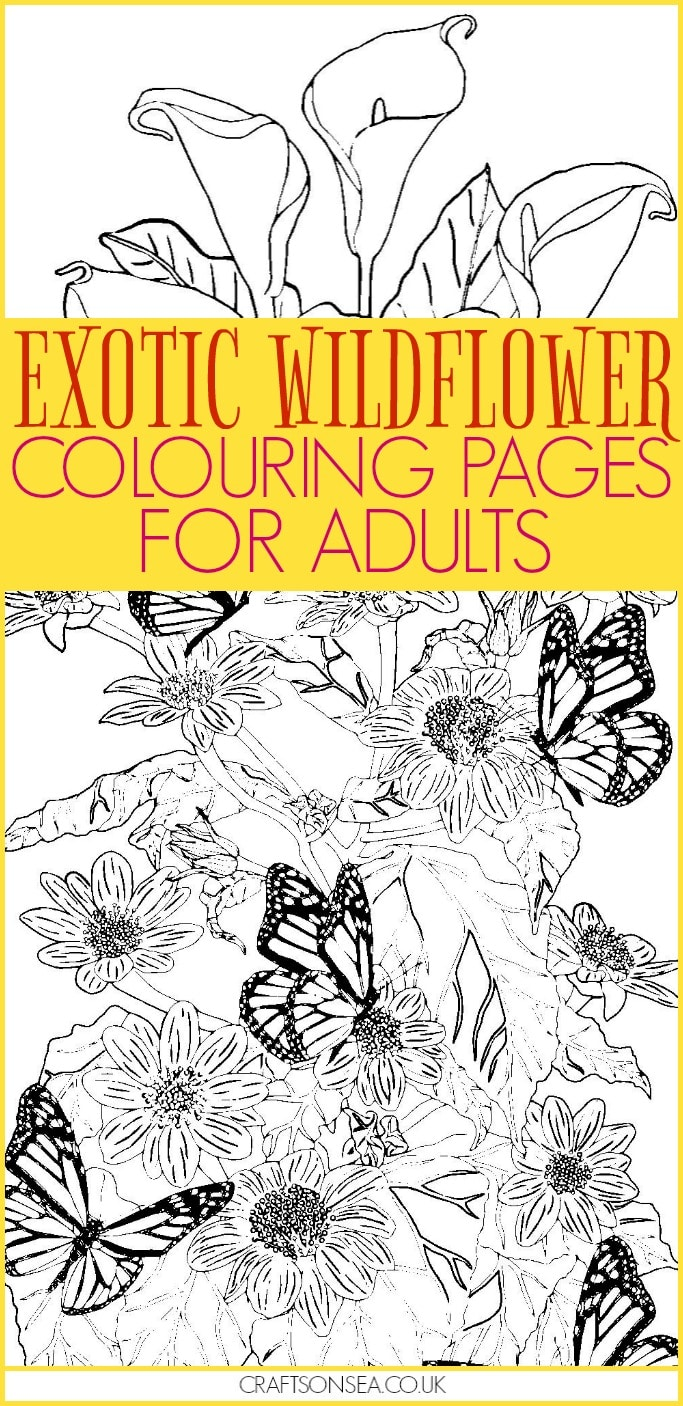 free wildflower colouring pages for adults