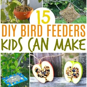 bird feeders kids can make square image 300