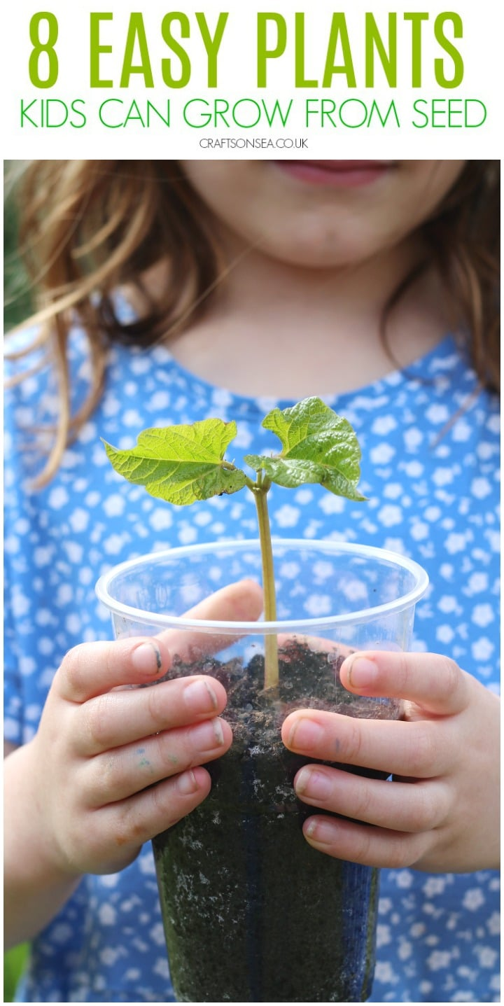 easy plants kids can grow from seed