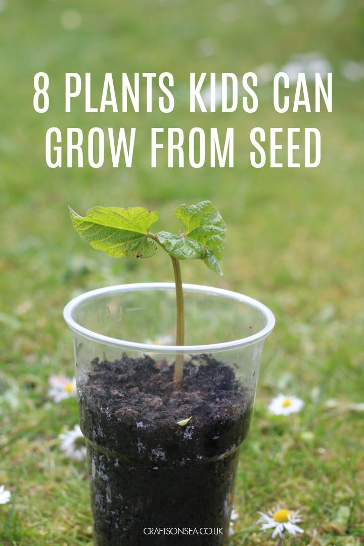 plants kids can grow from seed