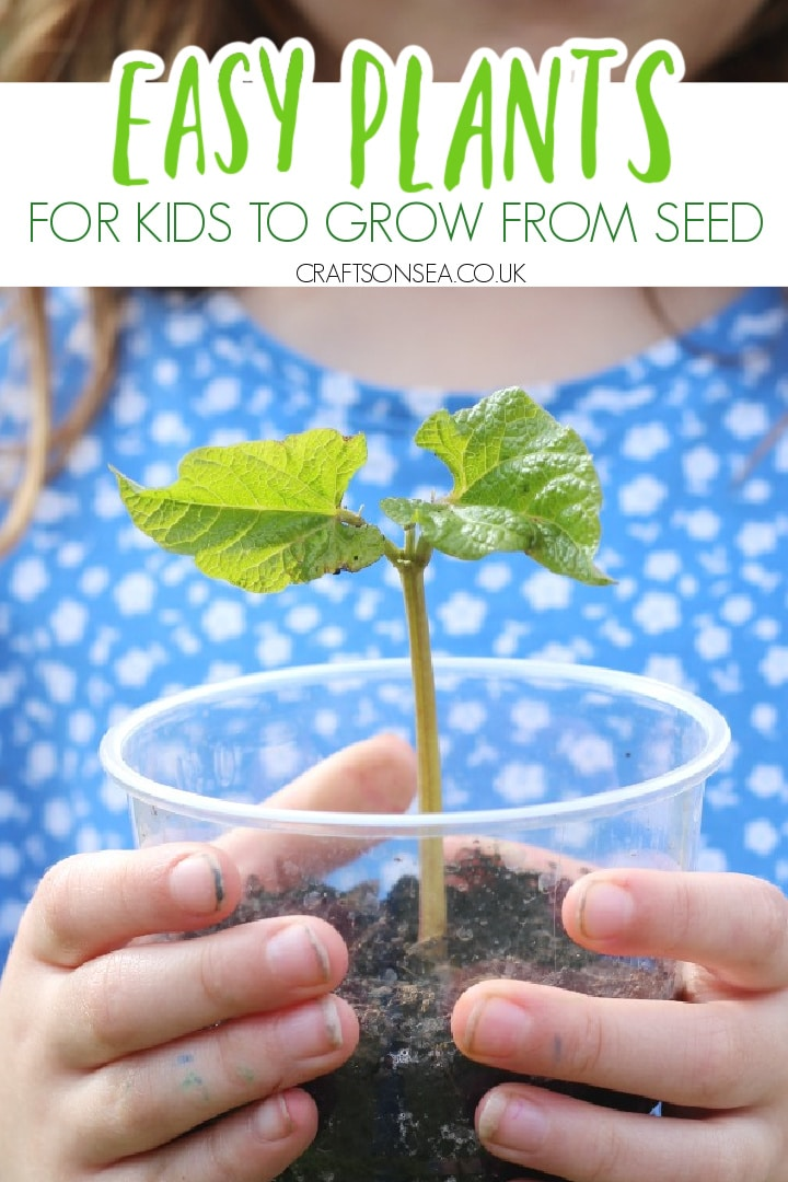 easy plants to grow from seed